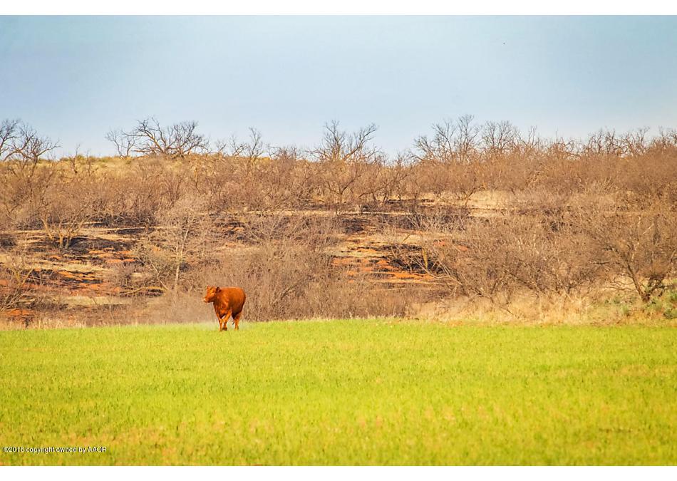 Photo of Jones Ranch Wellington, TX 79095