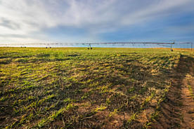 Photo of Texline Farm Texline, TX 79087