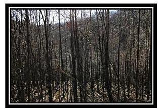 Photo of 265 Horton Sisters Road Oak Hill, OH 45656