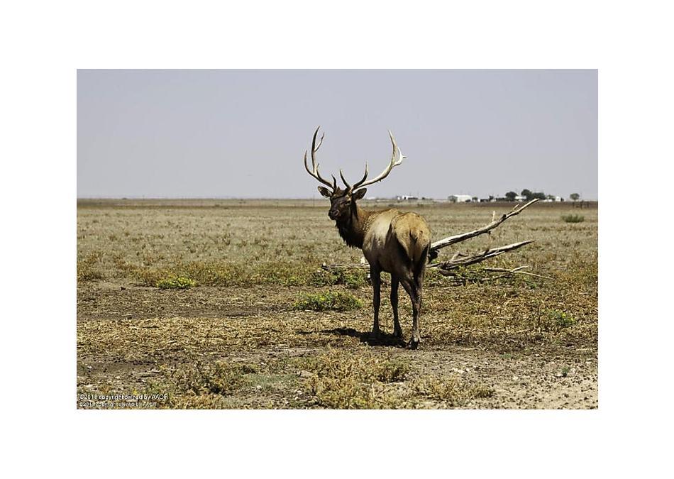 Photo of 12041 Equestrian Trl Amarillo, TX 79019