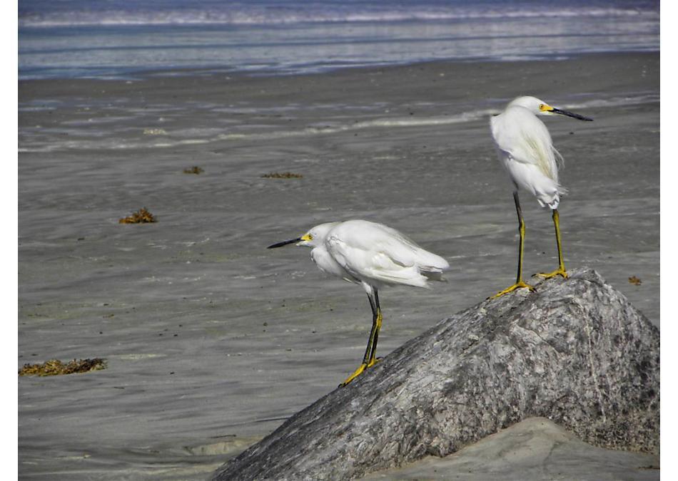 Photo of 139 Crepe Myrtle Court Palm Coast, FL 32164