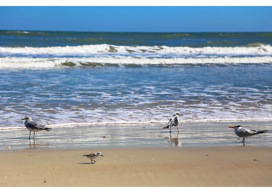 Photo of 7 Sebastian Ave St Augustine, FL 32084