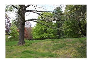 Photo of Lot 9 Grove Street Needham, Massachusetts 02492