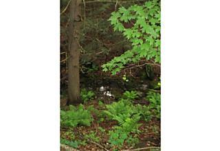 Photo of Wawarsing, NY 12483